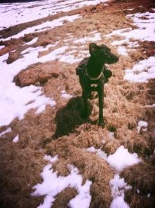 Luna, at tree line