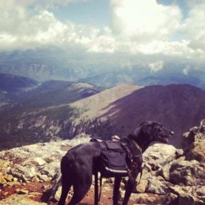 Luna #caninebadass enjoying the summit sweetness