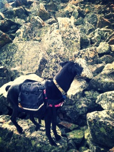 Luna sizes up some rocks.  See?  How hard was that?  Just call it like it is.