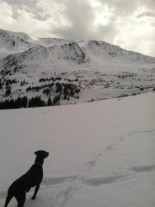 Luna looks out on the ridge by Mt. Elbert